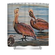 Pelican Party Shower Curtain