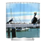 Pelican Perch Shower Curtain