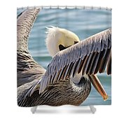 Pelican Playing Hide And Seek Shower Curtain