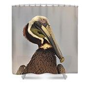 Pelican Portrait Shower Curtain