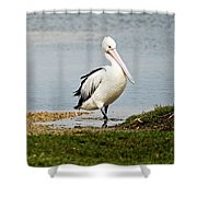 Pelican Pose Shower Curtain