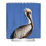 Pelican Pose Shower Curtain