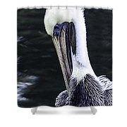 Pelican Profile Shower Curtain