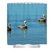 Pelican Racers Shower Curtain