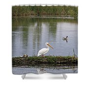Pelican Reflection Shower Curtain