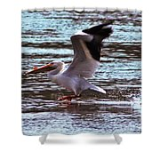 Pelican Skimming The Rock River Shower Curtain