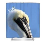 Pelican Soft Shower Curtain