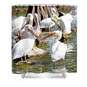 Pelican Squabble Shower Curtain