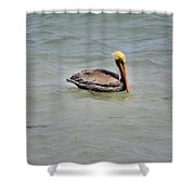 Pelican Swimming  Shower Curtain
