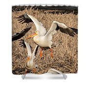Pelican Takeoff Shower Curtain