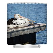 Pelican Taking Time Out 691 Shower Curtain