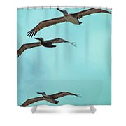 Pelican Trio Shower Curtain