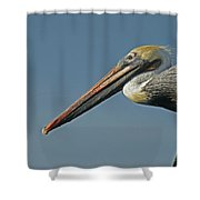 Pelican Upclose Shower Curtain