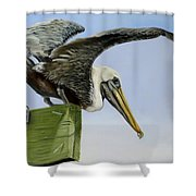 Pelican Wings Shower Curtain