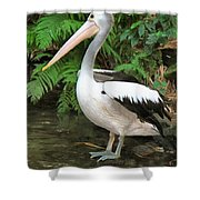Pelican With A Bird Park In Bali Shower Curtain