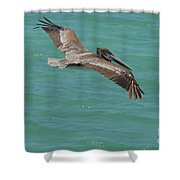 Pelican With His Wings Extended Over The Tropical Aruban Waters Shower Curtain