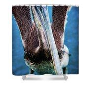 Pelicano Shower Curtain