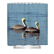 Pelicans 2 Together Shower Curtain