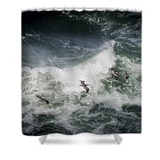 Pelicans And Surf Shower Curtain