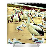 Pelicans At Pearl Beach 4.1 Shower Curtain