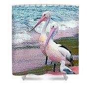 Pelicans At Pearl Beach 5.1 Shower Curtain