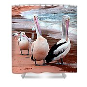 Pelicans At Pearl Beach 5.2 Shower Curtain