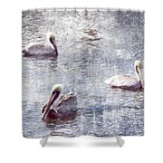 Pelicans At Rest Shower Curtain