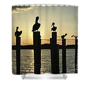 Pelicans At Sunset Shower Curtain