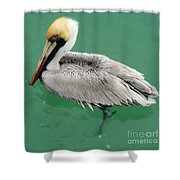 Pelican's Cove Shower Curtain
