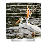 Pelicans Fishing Shower Curtain