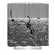 Pelicans Flying By - Black And White Shower Curtain