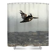 Pelicans Flying Over San Francisco Bay Shower Curtain