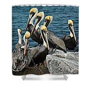 Pelicans Fort Pierce, Fl. Jetty Shower Curtain