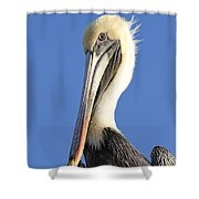 Pelican's Good Side Shower Curtain