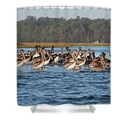 Pelicans, Murrells Inlet Sc Shower Curtain