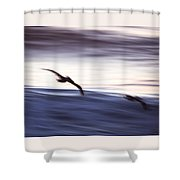 Pelicans Ocean Flight In La Jolla Shower Curtain