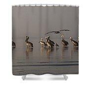 Pelicans On Beach Shower Curtain
