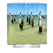 Pelicans On Pier Pilings Shower Curtain