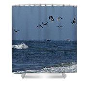Pelicans Over The Atlantic Shower Curtain