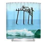 Pelicans Roost 1 4/25 Shower Curtain