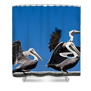 Pelicans Take Flight Shower Curtain