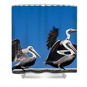 Pelicans Take Flight Shower Curtain
