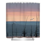 Pelicans Welcome The Day Shower Curtain