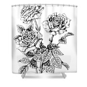 Pen And Ink Roses Shower Curtain