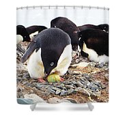 Penguin And Her Egg Shower Curtain