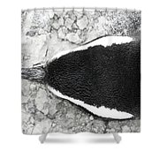 Penguin From Above Shower Curtain