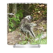 Pennsylvania Porcupine Shower Curtain
