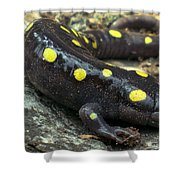 Pennsylvania Spotted Salamander Shower Curtain