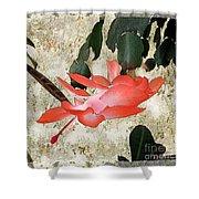 Penny Postcard Japonaise Shower Curtain