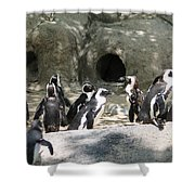 Penquins Homes Shower Curtain